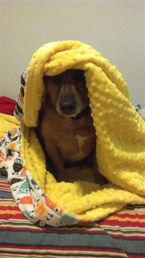 All bundled up   Handmade blanket, Handmade, Blanket