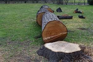 Baum Fällen Kosten Forum : innenputz kosten preisfaktoren sparm glichkeiten und mehr ~ Jslefanu.com Haus und Dekorationen