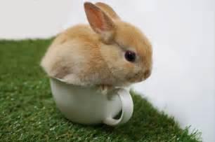 ウサギ:画像 : 【ウサギ好き必見 ...