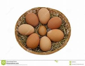 Comment Reconnaitre Des Oeufs Frais : oeufs de poules libres de gamme dans un panier image stock image du frais libre 30286053 ~ Louise-bijoux.com Idées de Décoration