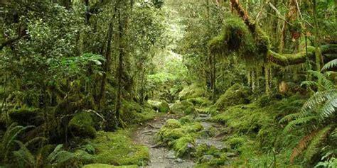 Trivia Quiz On Natural Vegetation - BestFunQuiz