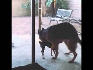 Dogs making love CRAZY!