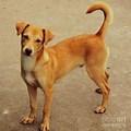 Leticia Dog